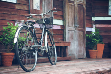 blue vintage old black and brown bicycle or bike at front of retro wooden home terrace with wood door and window between tree in the flowerpot for exterior and interior decor or classic background