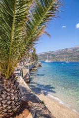 wakacje, Chorwacja, widok palma