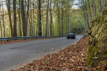 Car running through paved road of autumn leaves
