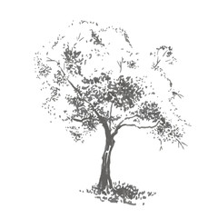 Hand-drawn aple tree. Realistic image in shades of gray, sketch painted with ink brush