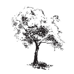 Hand-drawn aple tree. Black and white realistic image, sketch painted with ink brush.