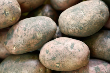 Unwashed new eco potatoes for sale on the local farmers market, close up