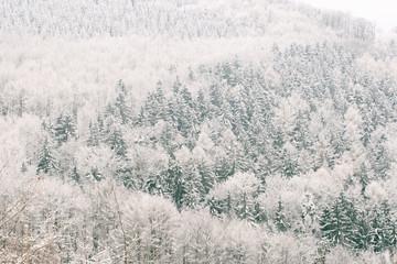 Wald in Raureif gehüllt