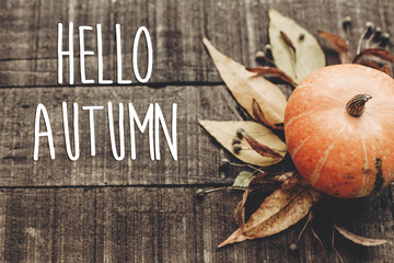 hello autumn text, greeting card. fall image. beautiful pumpkin and leaves and berries on rustic wooden background. cozy autumn mood