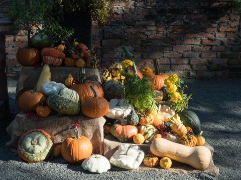 秋の収穫祭 #2