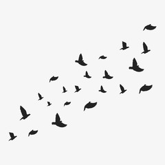 Birds. Vector illustration. Isolated.