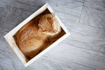 Red cat lying in a wooden box