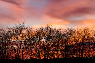 pink sky behind trees