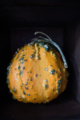 Decorative gourd with dark background