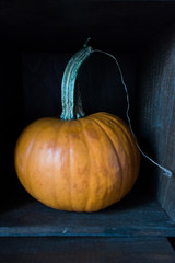 pumpkin with long stem inside shadowed box