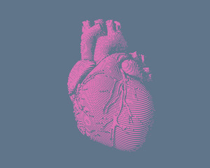 Engraving human heart illustration on blue BG