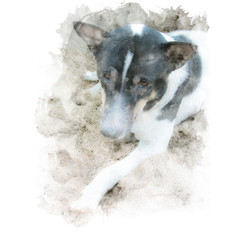 Black and white local thai dog sit on sand. Watercolor painting (retouch).