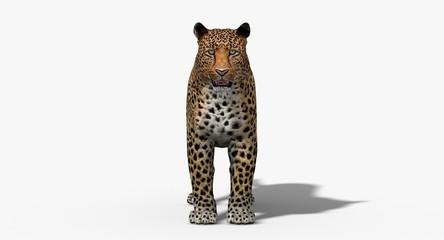 Jaguar (3D)