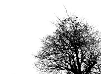 Black and white picture of trees on clear white sky. Use for death, mourning and sadness concept