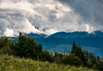 forest on hillside on cloudy day. gorgeous weather in Carpathian mountains in autumn