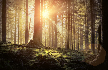 Beautiful forest view at morning. Sun peeps out through the tree