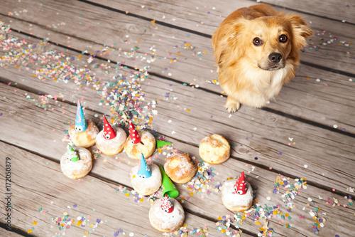 Treuer Hund Stockfotos Und Lizenzfreie Bilder Auf Fotoliacom