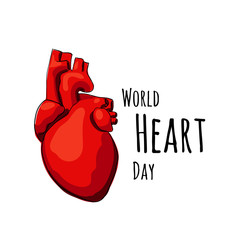 Vector real heart isolated on a white backgrounds.