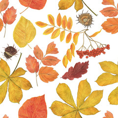 Poster Draw Watercolor painting autumn seamless pattern with yellow, red leaves and rowan berries