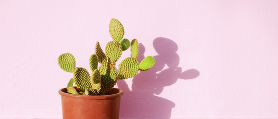 Foto op Aluminium Cactus Green cactus in a flowerpot on a pink background