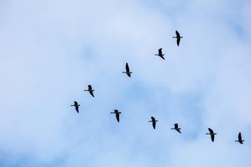 The birds in the sky