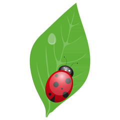 The ladybird sits on a green leaf