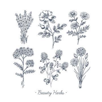 Hand Drawn Vintage Beauty Herbs