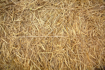 Close up of straw background texture.