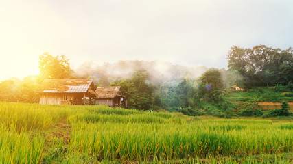 landscape of green terraced rice field and small hut at countryside with beautiful fog around mountain nature background in the morning with wonderful golden light. Simple life of rural people in Asia