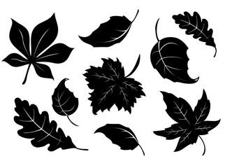 Stamps of autumn leaves