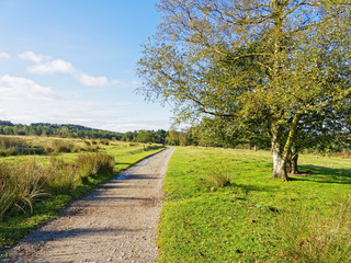 In the early morning a footpath leads over a meadow towards a forest in the distance