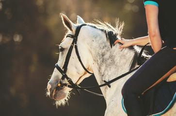 Horsewoman rider stroking horse mane