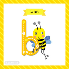 Letter B lowercase cute children colorful zoo and animals ABC alphabet tracing flashcard of Happy Bee standing for kids learning English vocabulary and handwriting vector illustration.