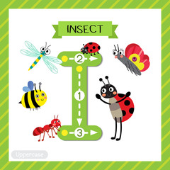Letter I uppercase cute children colorful zoo and animals ABC alphabet tracing flashcard of Insects for kids learning English vocabulary and handwriting vector illustration.