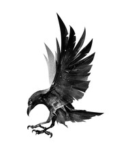 drawn flying bird Raven on the side on white background