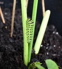 Green caterpillar crawling on a stem.