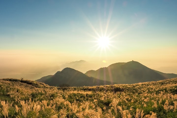 Silver grasses on Datun Mountain with sunset in YangmingShan National Park. (Taiwan)