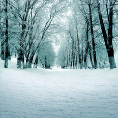 Winter nature, snowy alley in park