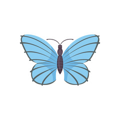colorful Butterfly Vector Design Illustration. summer insect