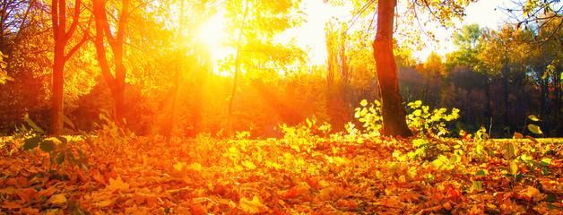 autumn trees on sun