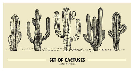 Vector set of hand drawn cactus. Sketch illustration. Different cactuses in monochrome style