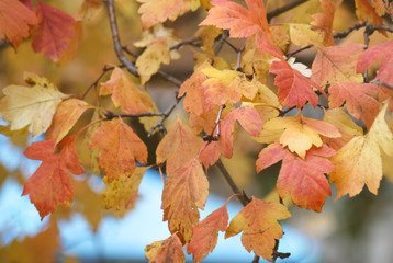 yellow autumn leaves on a tree branch, colorful background