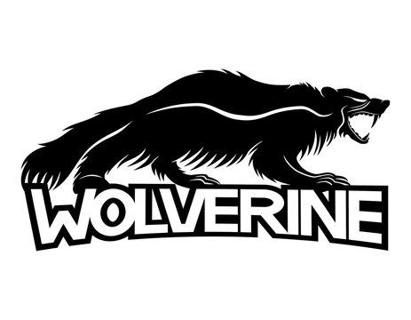 Wolverine animal.