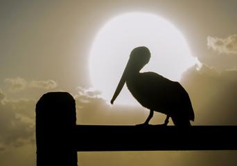 Pelicano en el amanecer