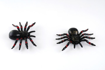 Toy spider for halloween decoration isolated on white background