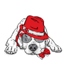 A cute puppy with a hat and glasses. Vector illustration for a postcard or a poster, print for clothes. Pedigree dog. Labrador.