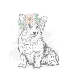 Lovely puppy in a flower wreath. Vector illustration for a postcard or a poster, print for clothes. Pedigree dog. Welsh Corgi. Lilies and jasmine.
