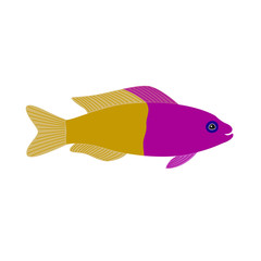 yellow purple fish aquarium exotic fish tropical
