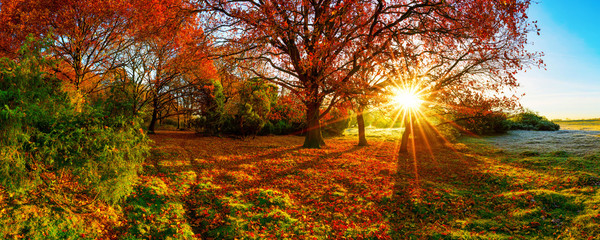 Fototapete - Wonderful autumn landscape with bright sun, colorful trees and wide meadows