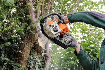 Klettergurt Für Baumfällung : Bilder und videos suchen: baumschnitt